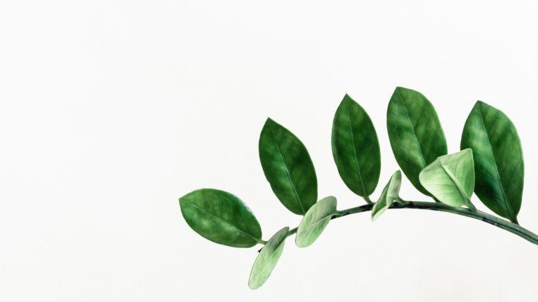 Les plantes d'intérieur pour végétaliser son appartement